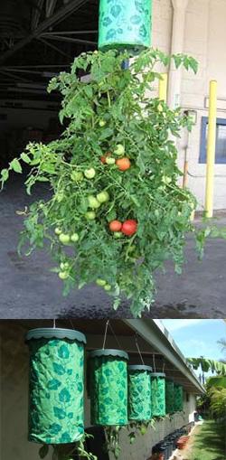 Устройство для выращивания овощей